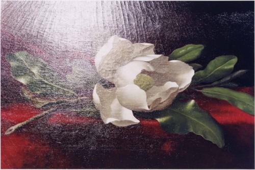 Tim Davis, <i><i><i>Magnolia</i></i></i></i>, photograph, 2005