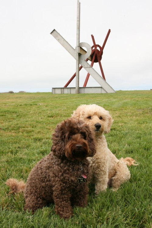 Crissy Field Notes: Dogs on di Suvero