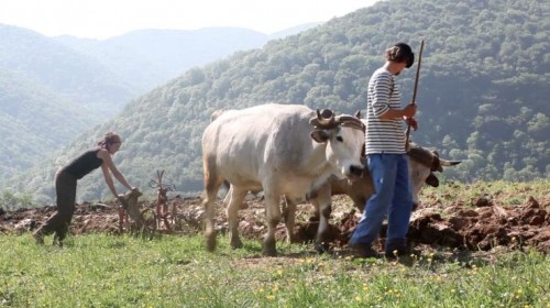 The Plowing Lesson, May 2012, Nescus, Ariege. Photo by Suzanne Husky.